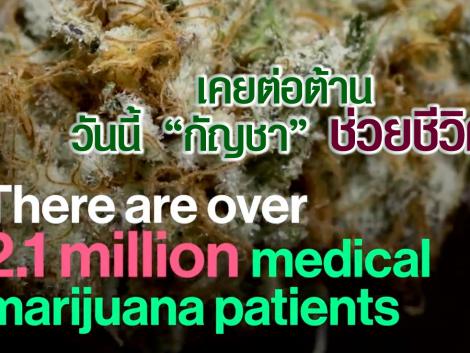 cbdclinicthailand.com thailandcannabiscenter.com thailandcannabiscenter.org thailandcannabisclinic.org